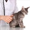 Ветеринарные клиники в Балашове